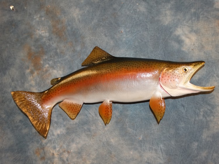 "26"" Lifelike Reproduction Rainbow Trout Taxidermy Fish Mount For Sale"