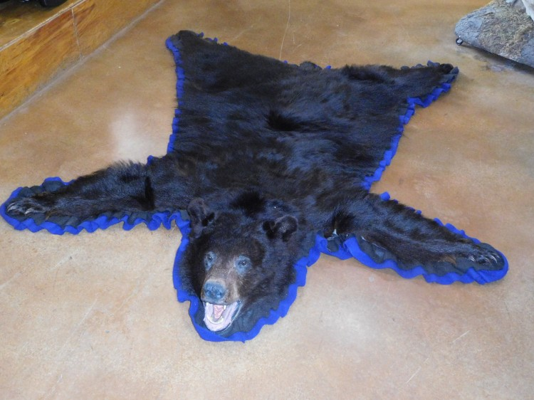 Black Bear Rug Taxidermy Mount For Sale