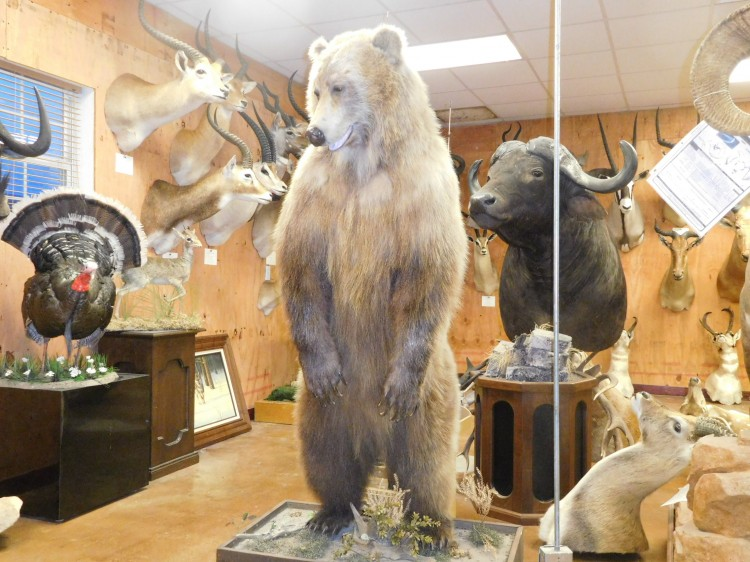 Standing Grizzly Bear Taxidermy Mount For Sale
