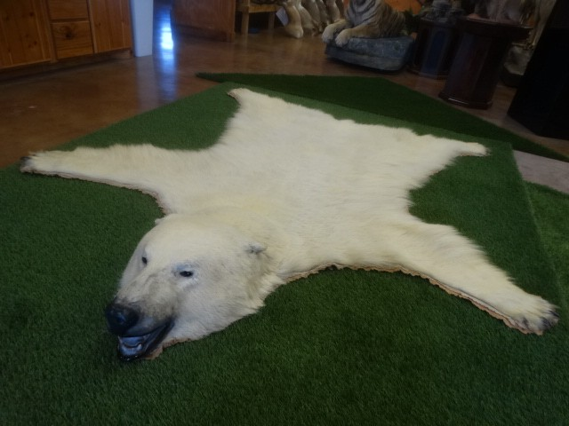 Polar Bear Rug (Legal with paperwork) Taxidermy Mount For Sale