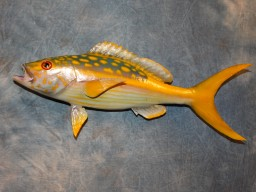 "Cool 15"" Yellowtail Snapper Taxidermy Fish Mount For Sale"