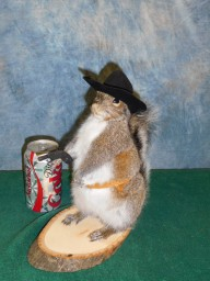 Brand new Cowboy Squirrel Taxidermy Mount For Sale