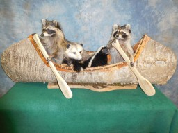 Brand new Noah's Ark Raccoon's in a Canoe going Fishing Taxidermy Mount For Sale